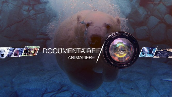 imineo Documentaires