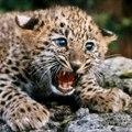 lionsfightingtodeath