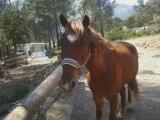 Mon poney, je craque tu me manque telement .....