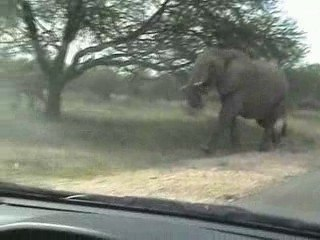 charge d'elephants