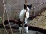 le chat qui se prenait pour une streap teaseuse...