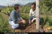 Saveurs de l'Ain : Les vins du Bugey