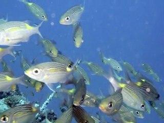 Ari Atoll - Maldiven