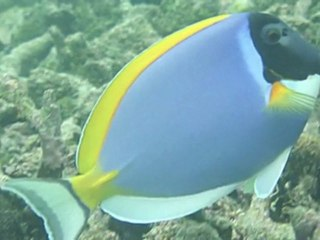 Kaafu - Malediven