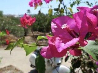 Isola di Pantelleria  - Sicila - Italia