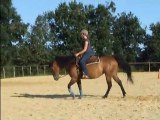 Stand by me dream, jument quarter horse née en 2002