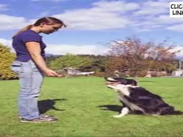 The full Secrets to Dog Training ~ Top Internet Program