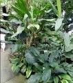 Les plantes des forêts tropicales humides des serres du Jardin botanique du Montet