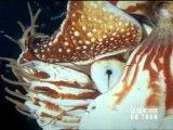 La géologie du Tour de France 16 : les ammonites de Moydans
