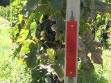 Domaine des Molards - Russin - caveau, vignes, vins