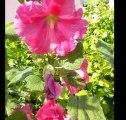 2011-07-02-jardin d'été