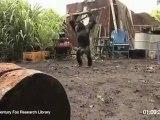 La Planète des singes  Les Origines - Viral Video - Ape With AK-47