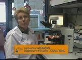 Métiers de la science au CNRS et dans ses UMR - C. Widmann