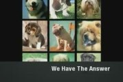 Dog Breeds Explained. All Dog Breeds Explained In Detail