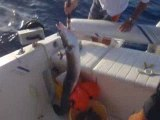 congre en pêche profonde