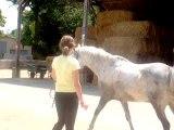 cheval équilibre 020