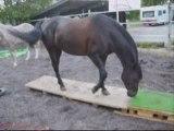 Zora, travail au sol et à cheval en liberté