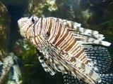 aquarium de st-malo; les exotiques.. (3eme part.)