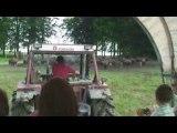 Bisons (2) - Ardennes belges