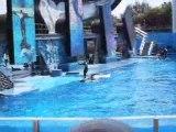 Orques - SeaWorld Orlando FL 2