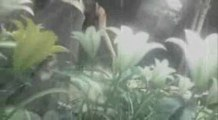 [AMV] Final Fantasy VII Advent Children on Guilty Gear XX