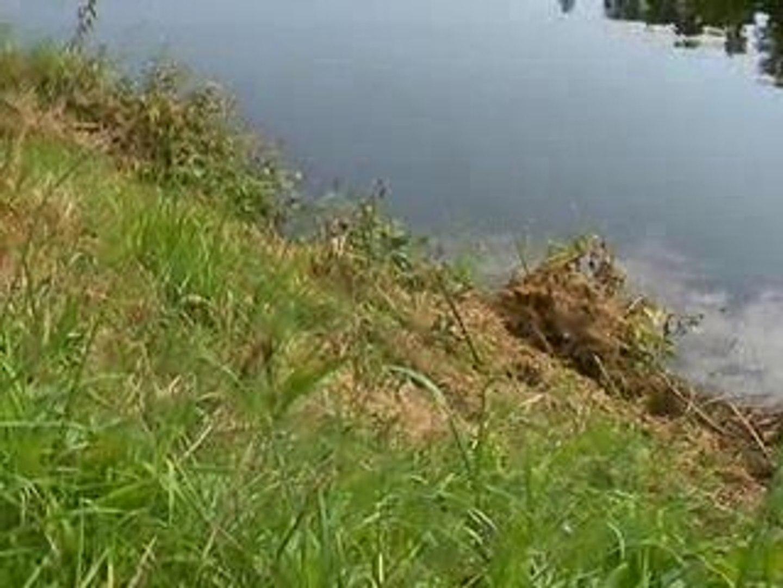 L'étang du Boulet près de Feins