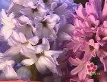 fleurs : fleurs et débrouille