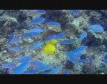 VOYAGE SOUS LES MERS 3D Bande Annonce du Film