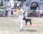 COGNAC AGILITY - OPEN - VODKA - 12 07 09