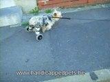 Chariot pour chien handicapé  et paralysé