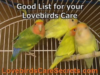 Proven Tips of Lovebirds Care