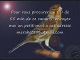 CD Chant de canaris TIMBRADO ESPAGNOL