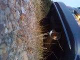 Toyota Celica ST202 HKS Silent Hi-power