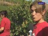 Vendanges 2009 : Dans les vignes de Guebwiller