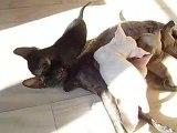 Diablesse et ses chatons dans un ryon de soleil
