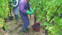 Domaine Barmes Buecher - Pinot Noir Vieille Vigne 2009
