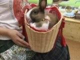 Les lapins câlins se répandent dans les cafés japonais