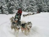 Traineau A Chiens Mont-Tremblant Quebec Canada Dogsled