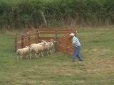 les moutons sont des sales bêtes !