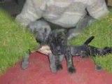 Chiots nés à l'élevage