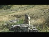 La chanson du miam miam des marmottes (nom nom song)