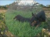 video du 03 avril 2009 avec alter ,sam et titi,poucinette-1