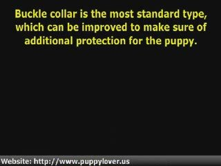 Dog Training – The Right Collar For Your Dog