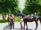 projet montage cheval