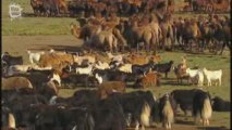 Animaux de Mongolie