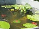 Jardin : petite fontaine