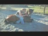 tempete me horse