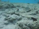 piscine naturelle de l'île des Pins II