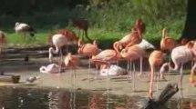 Wildnis im Krefelder Zoo