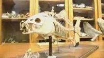 Zoologie (Où sont passées les collections ?)